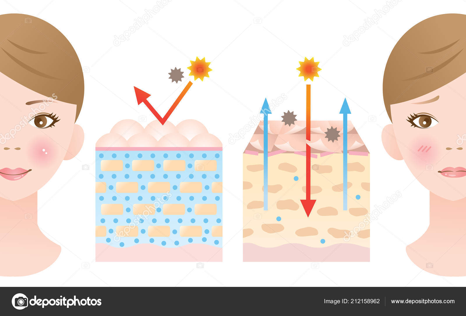 hight resolution of normal dry skin diagram illustration woman beauty skin care concept stock vector