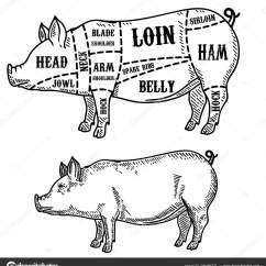 Pig Cuts Diagram Sick Photoelectric Sensor Wiring Butcher Pork Design Element Poster Card Emblem Stock Vector