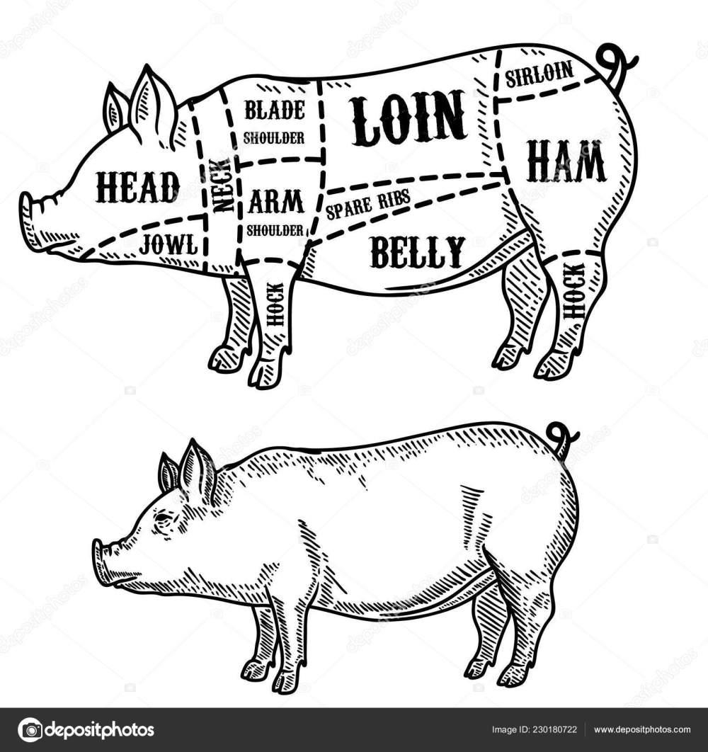 medium resolution of pig butcher diagram pork cuts design element poster card emblem stock vector
