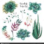 Green Colorful Succulent Bouquets Vector Design Objects All Elements Isolated Stock Vector C Yuliyaart 227858430