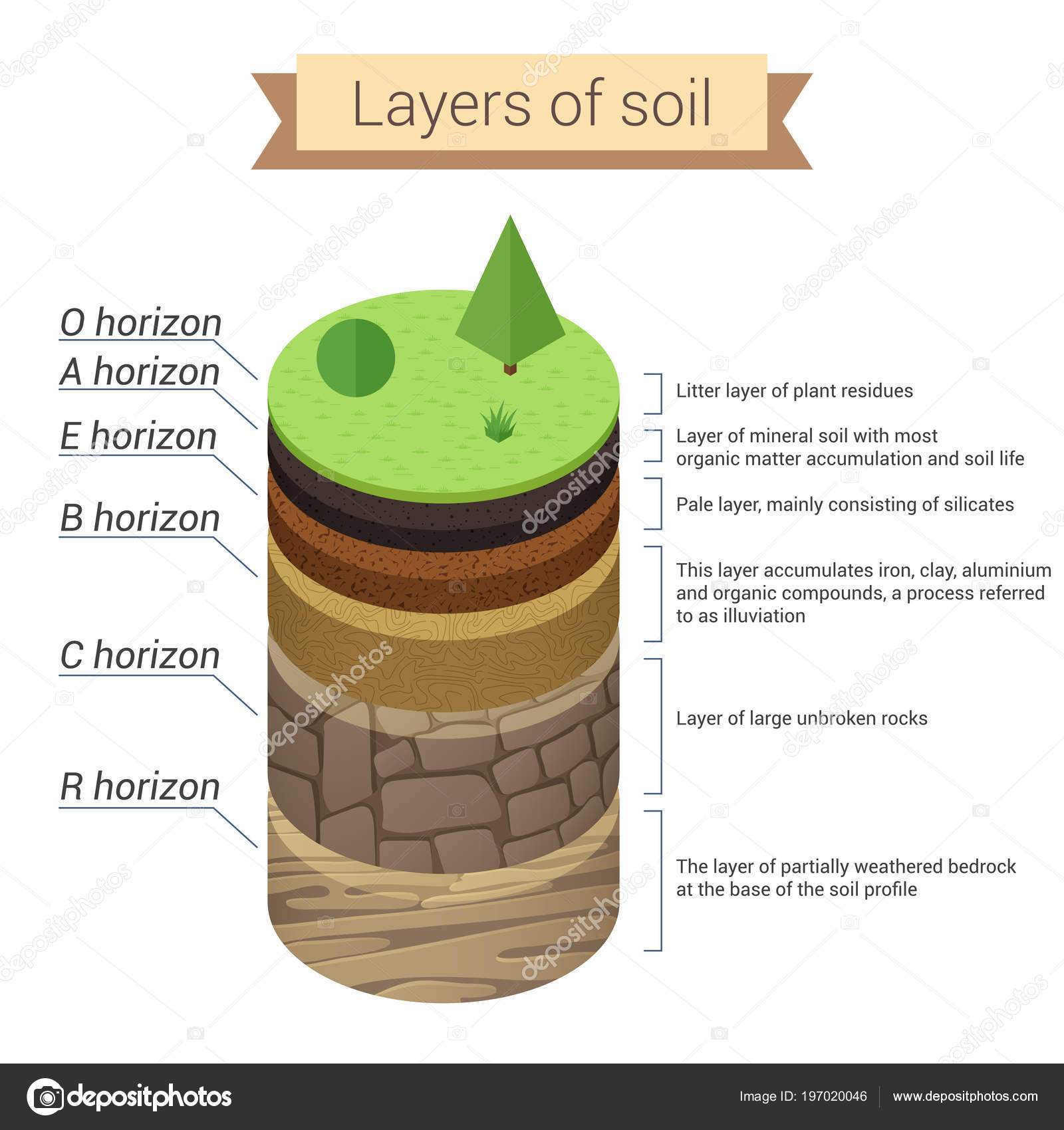 hight resolution of soil is a mixture of plant residue and fine mineral particles which form layers vector diagram vector by lembergvector