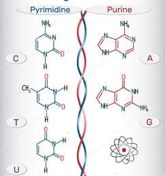 chemical structural formulas of purine and pyrimidine nitrogenous bases adenine a ade guanine g gua thymine t thy uracil u cytosine c  [ 1358 x 1700 Pixel ]
