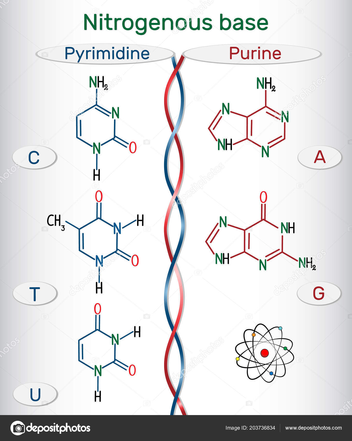 hight resolution of chemical structural formulas of purine and pyrimidine nitrogenous bases adenine a ade guanine g gua thymine t thy uracil u cytosine c