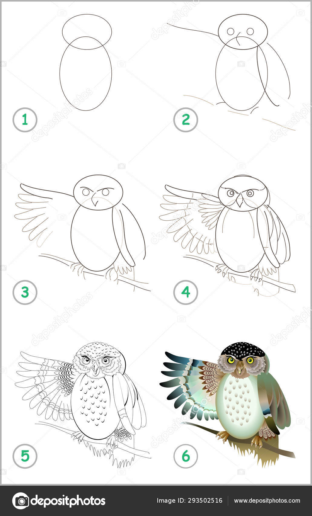 Educational Page Kids How Draw Step Step Cute Owl Back