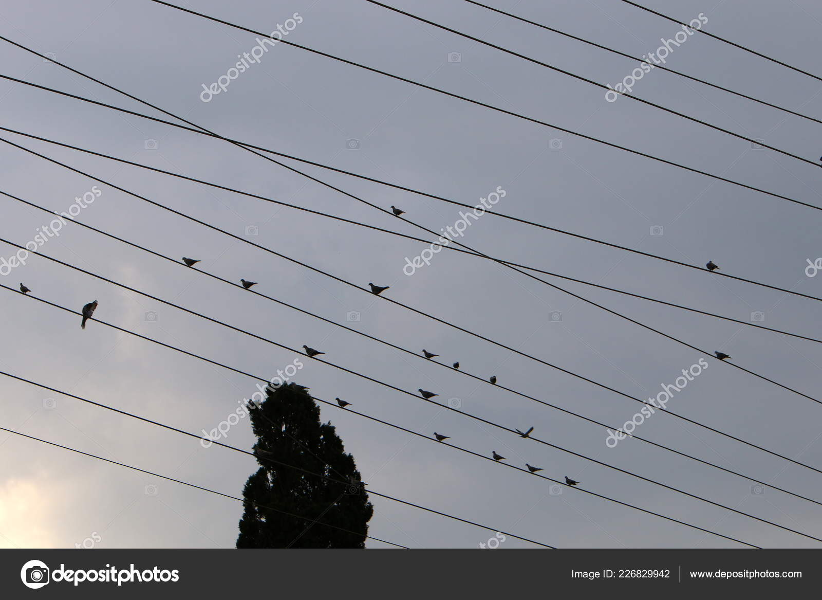 hight resolution of electrical wires support which electricity stock photo