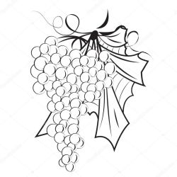 ✅ A Bunch of grapes outline vector illustration on a white background isolated premium vector in Adobe Illustrator ai ai format Encapsulated PostScript eps eps format