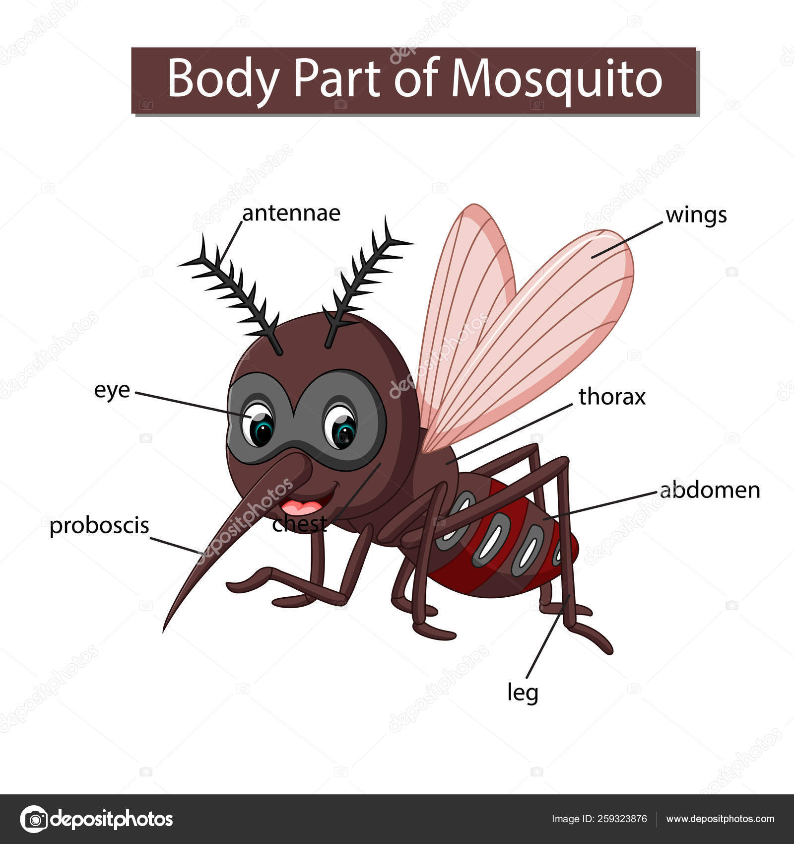hight resolution of diagram showing body part mosquito stock vector