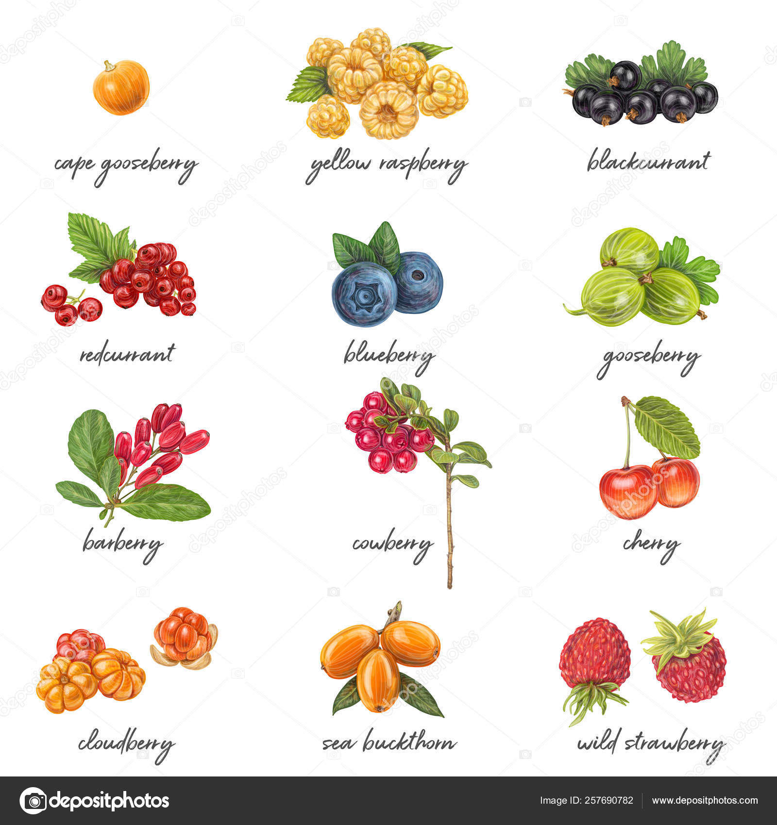 pictures berries with names