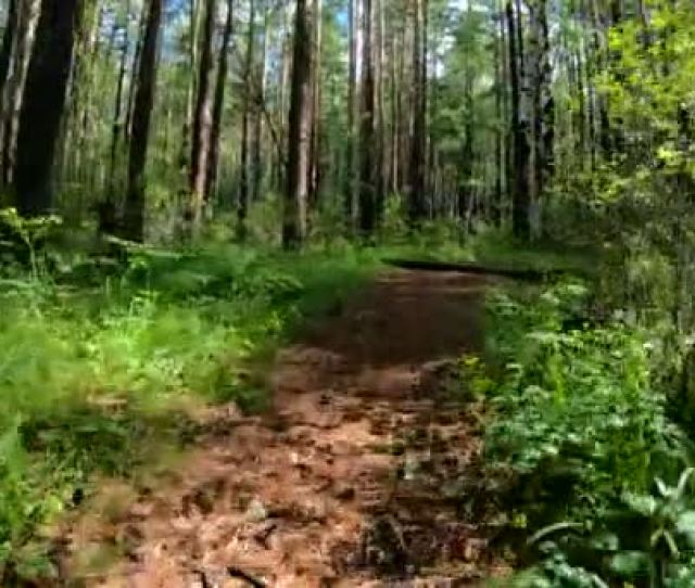 Dog Or Some Beast Running Along The Forest Path Pov Stock Footage