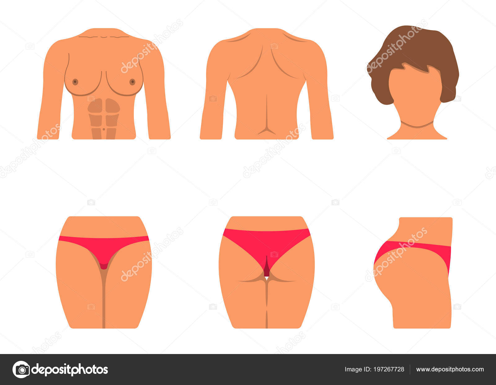 hight resolution of set of white woman body part fat and sporty body icon vector illustration label vector by apvaper
