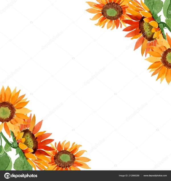 watercolor orange sunflower flower