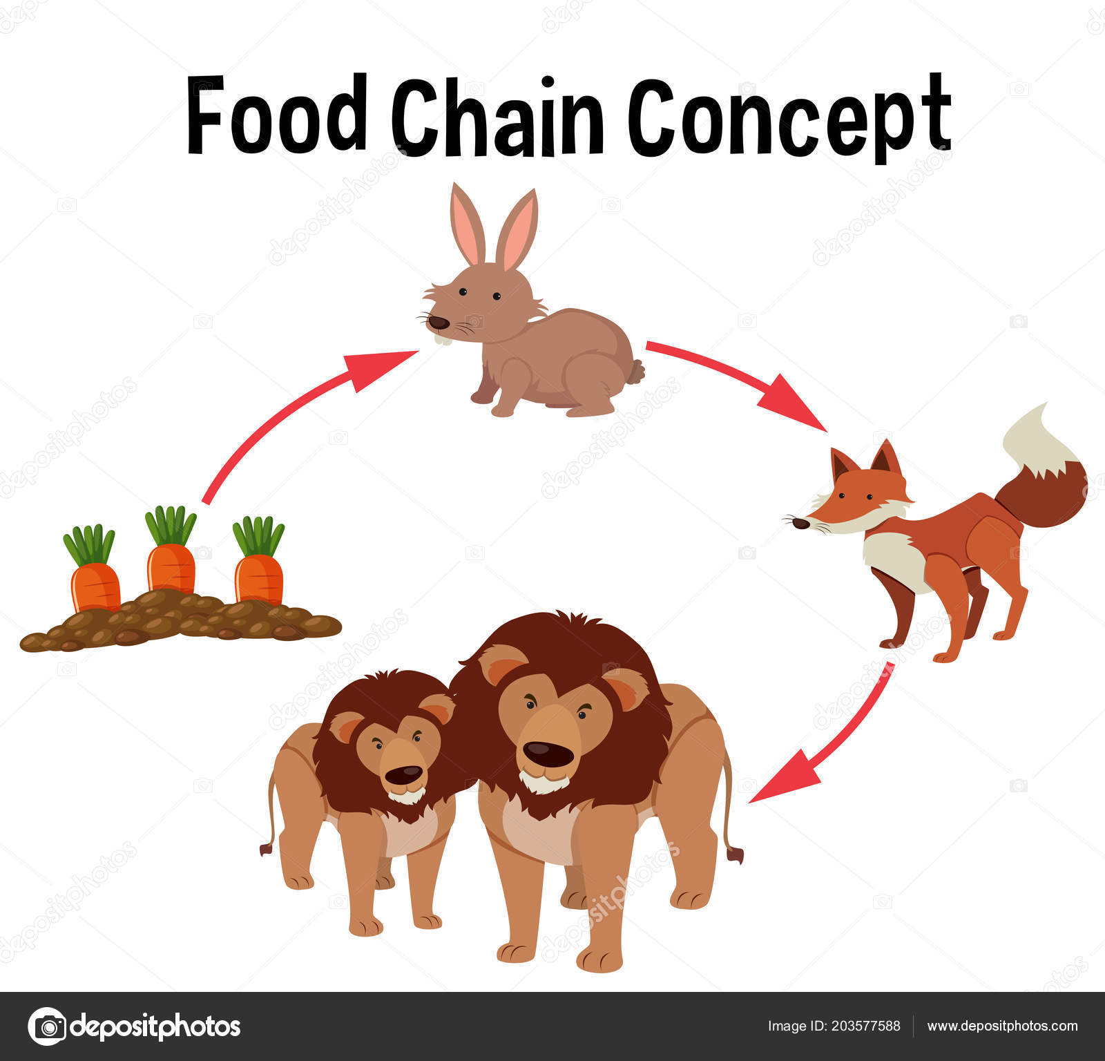 The Food Chain Diagram