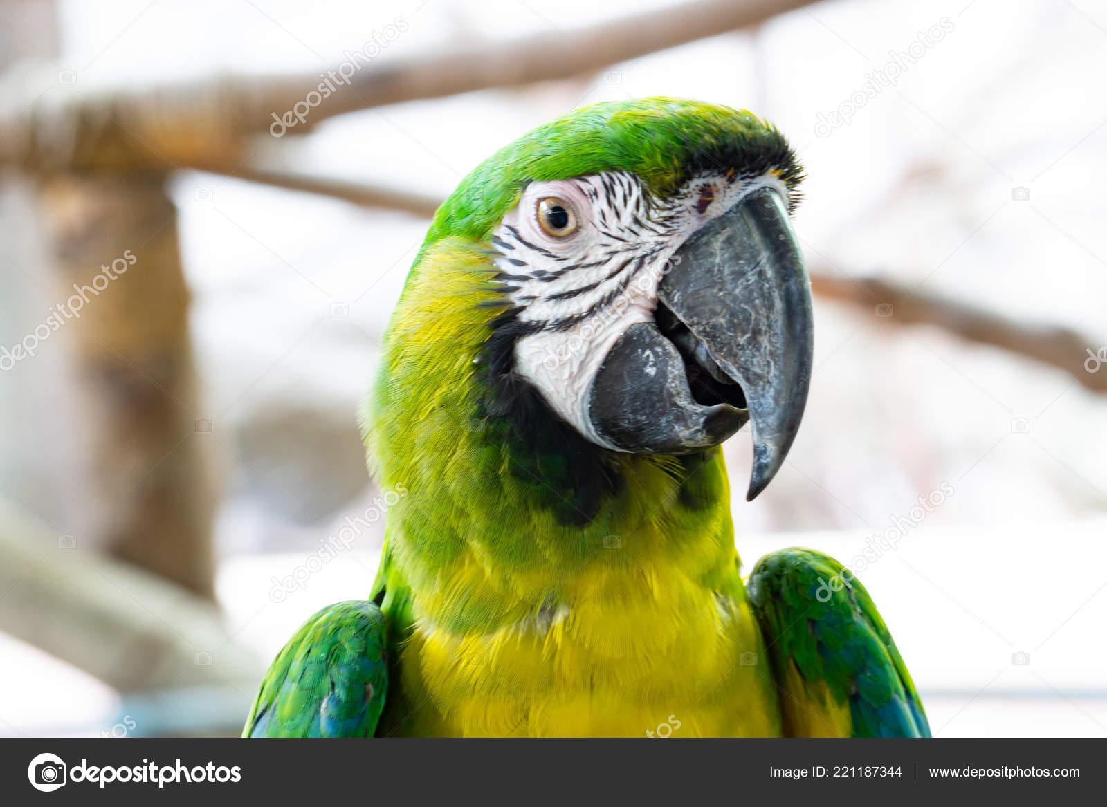 photos severe macaw severe