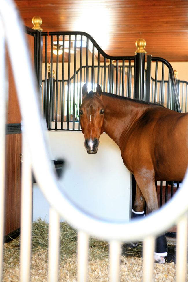 Equestrian Oasis In Palm Beach Point Stable Style