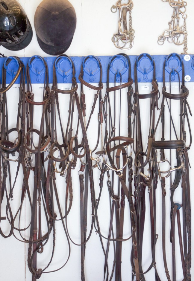 bridles hanging neatly in the tack room