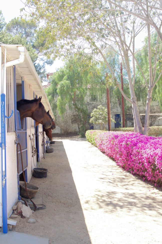 horses looking out of their stalls towards the landscaped grounds