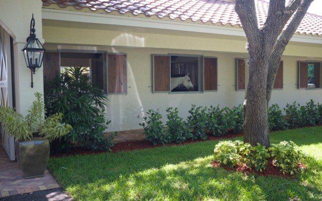 horse looking outside to the lush property