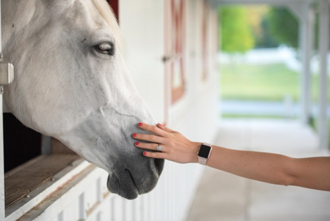 a gentle moment between horse and human