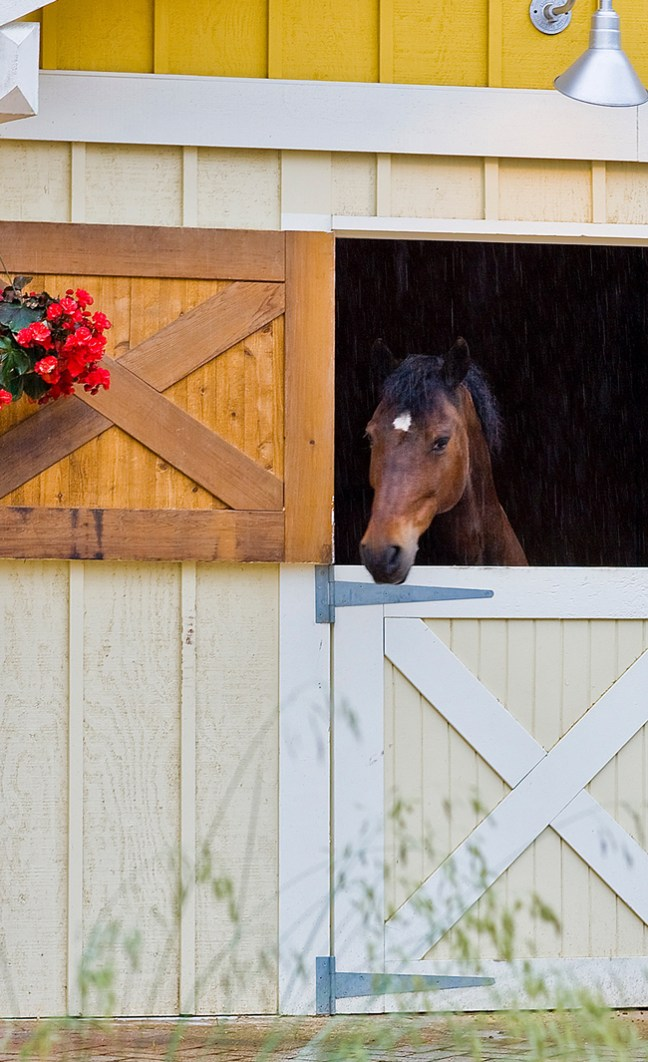 horse inside its stall with dutch doors