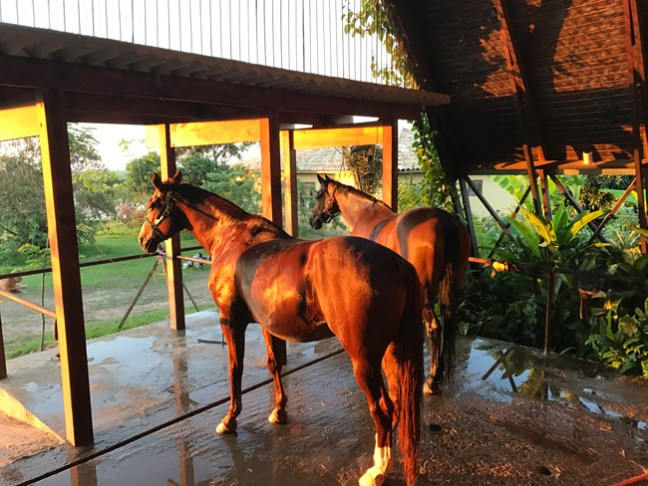 horses at the wash rack