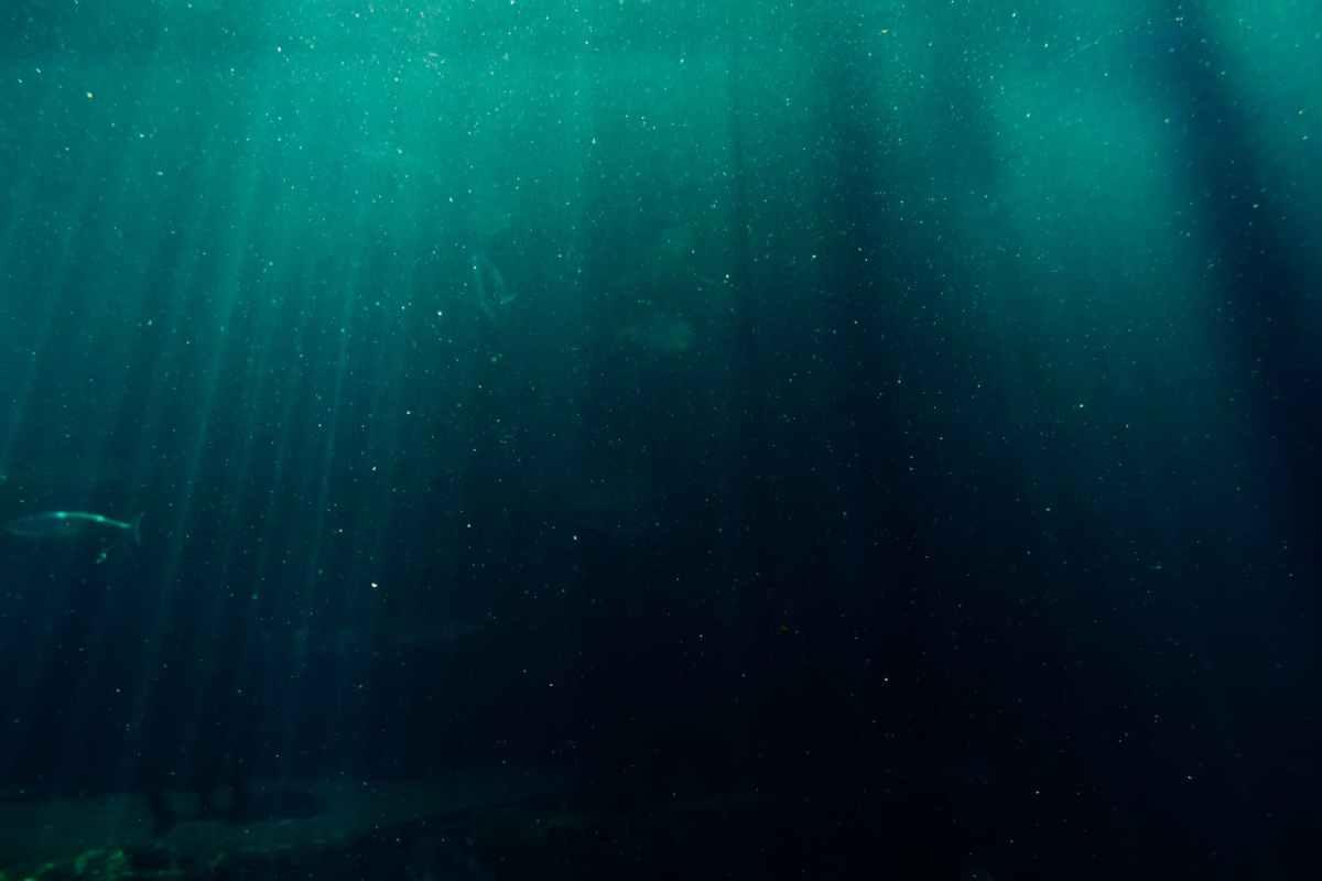 underwater photography of deep sea