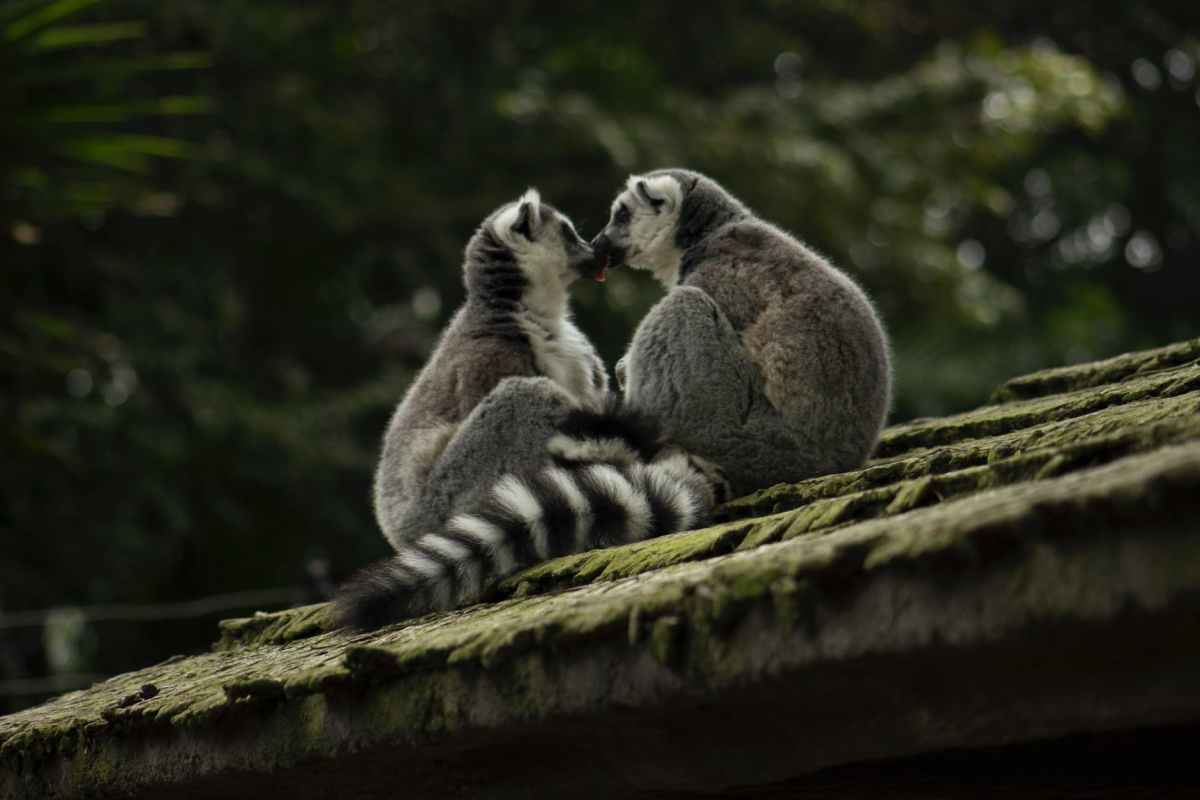 two primate on roof