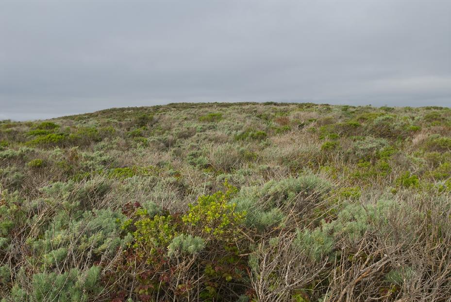 pointlobossandhill