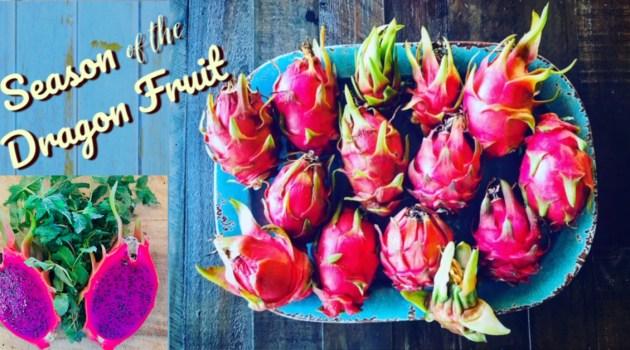 season of the dragon fruit st croix