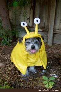Cute Dog Costumes