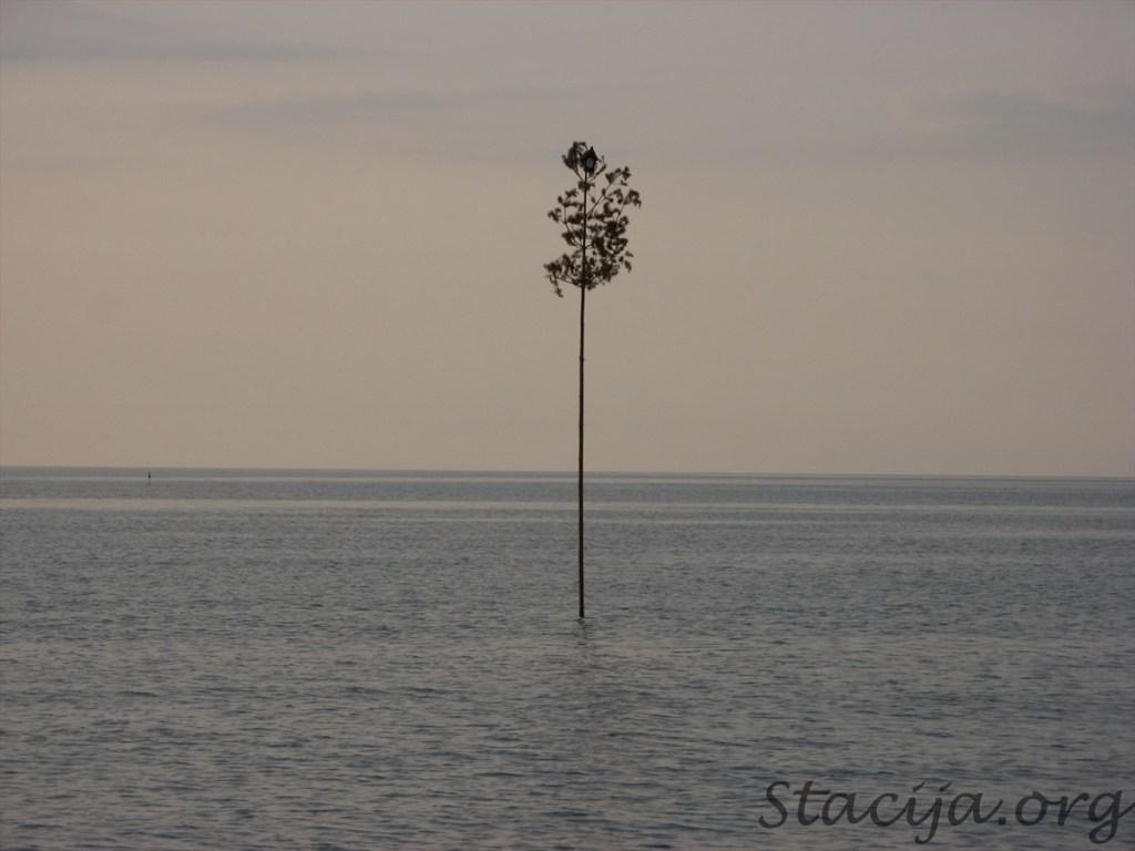 Priede jūrā