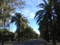 Palmy w Parque Maria Luisa vol2
