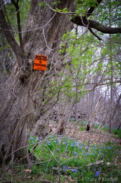 """Tree with a bright orange """"no trespassing"""" sign stands in the middle of the woods surrounded by bluebells."""