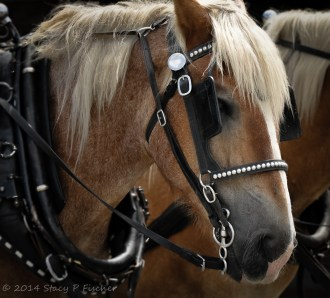 Horse (After), by Stacy Fischer, Visual Venturing