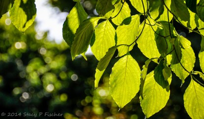 Leaves (After), by Stacy Fischer, Visual Venturing