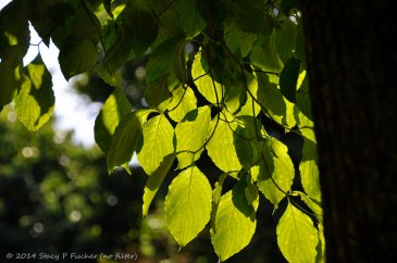 Leaves (Before), by Stacy Fischer, Visual Venturing
