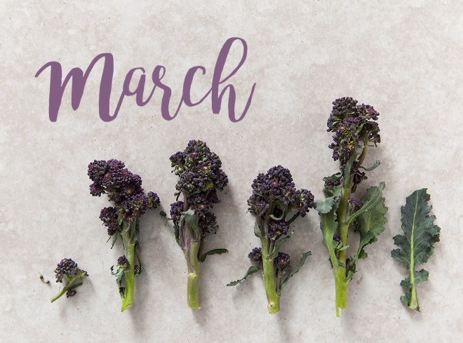 Purple Sprouting Broccoli by Stacy Grant