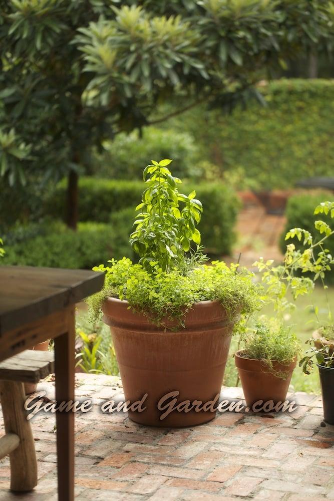 Italian Herb Pot