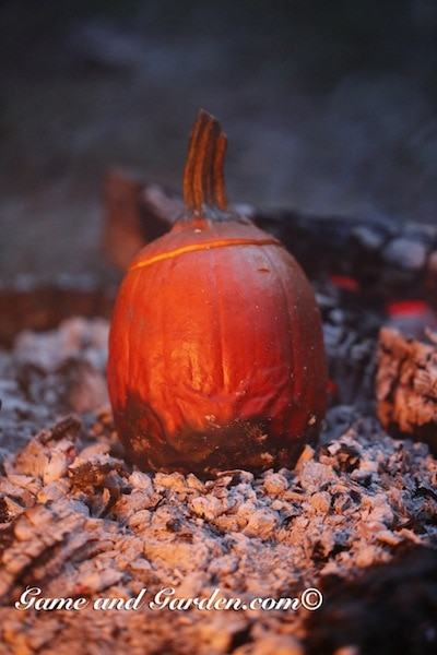 The hot coals give exactly enough heat to cook the entire pumpkin.