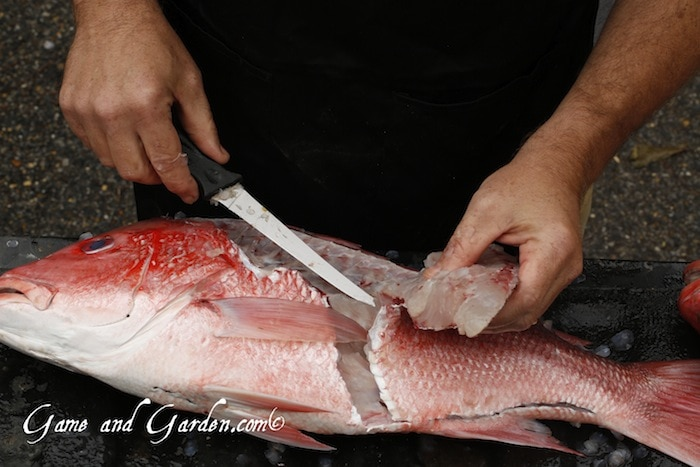 Scott cleaning red snapper