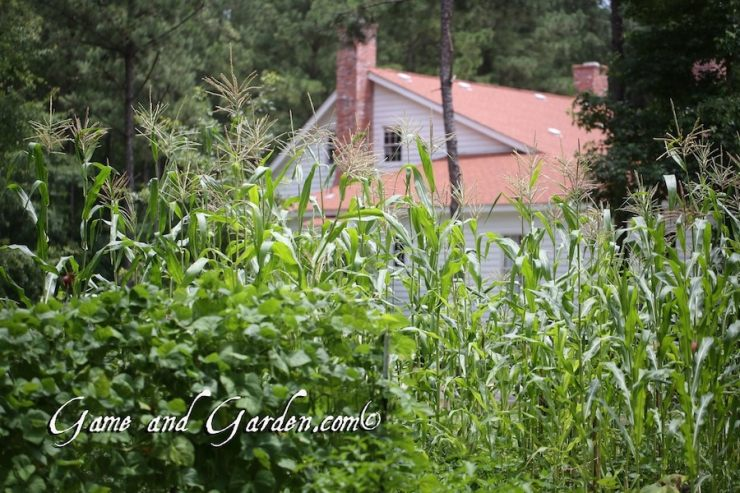 This is actually our farm house that we build to replicate the houses of the past.
