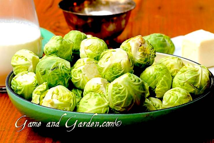 Brussels sprouts surprisingly contain 2 grams of protein for 1/2 cup.