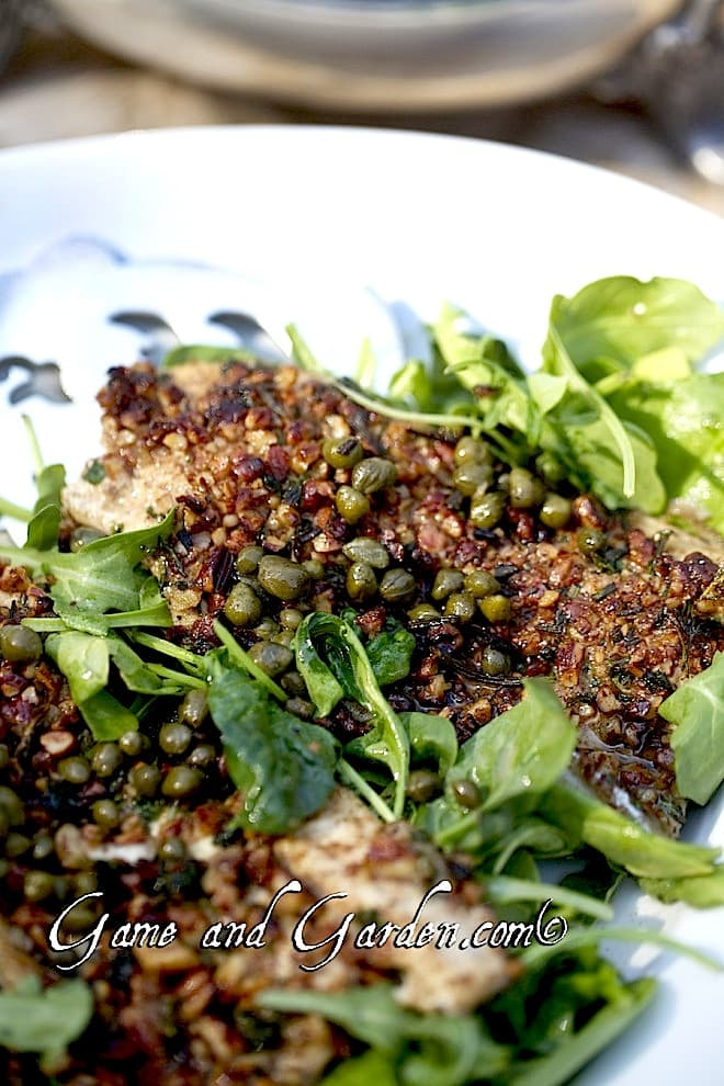 Herb and Pecan Crusted Trout is one of my very favorite ways to cook trout. If you are looking for a good recipe for Good Friday or Easter, this is for you. It is beautiful, quick and easy!
