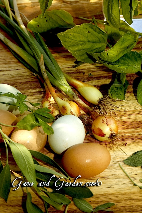 Just about everything I need to make my awesome Herb Frittata! I just love fresh herbs, onions, and eggs!