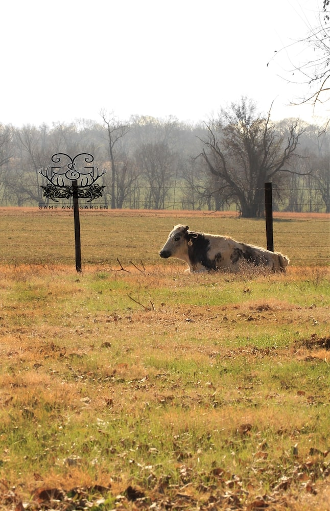 How serene this cow looks. I need to learn to relax like that!