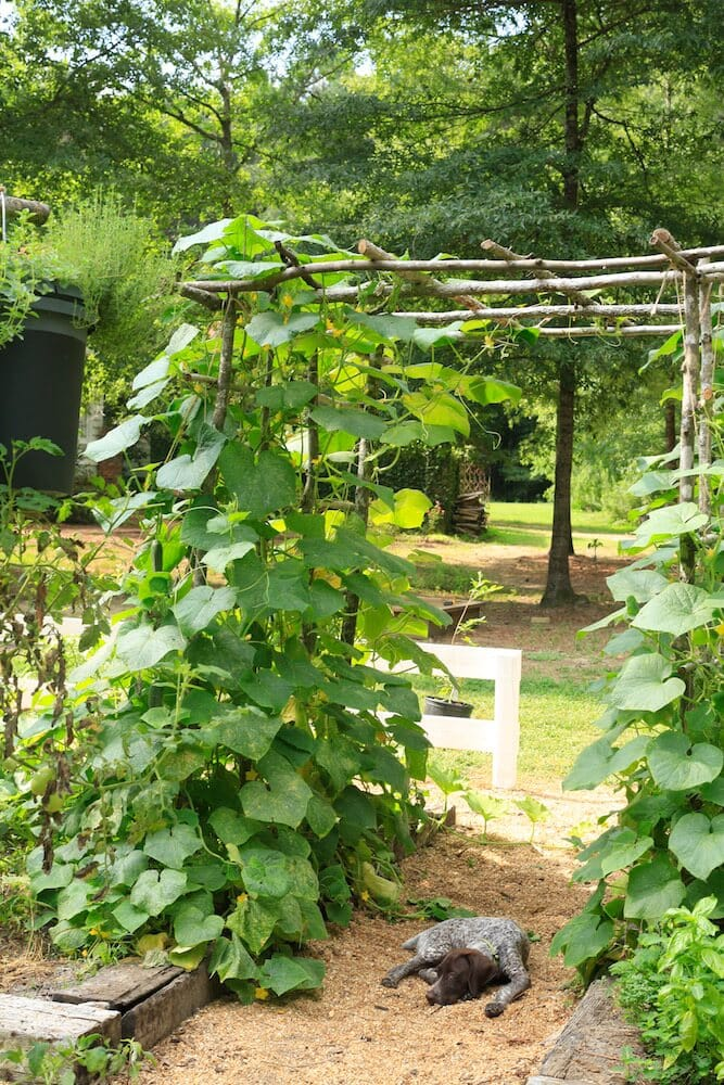 Tips For Using A Garden Trellis To Grow Cucumbers Stacy Lyn Harris
