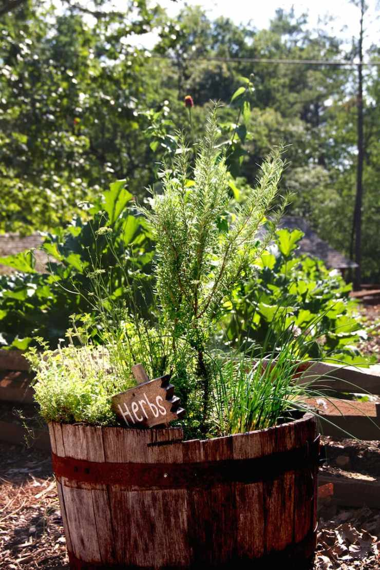 Growing herbs outdoor in a container