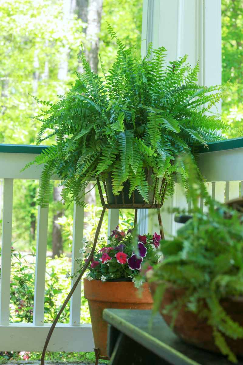 Fern in cast iron planter with flowers on the bottom