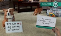 STAINMASTER PetProtect Carpet helps you #UnShameYourPet ...
