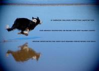 Winkler_Posters_12376256_10153769263262421_5768722059487520594_n