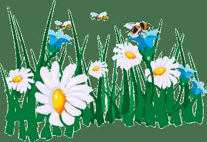 Stadt, Land, Fluss – Pflanzen von A-Z